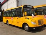 15-38 Seats School Bus for Sale
